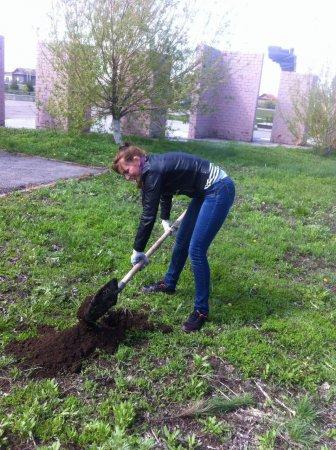 Продолжается озеленение территории мемориального комплекса в селе Синодское